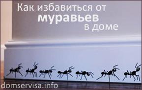 Как избавиться от муравьев насекомых в доме